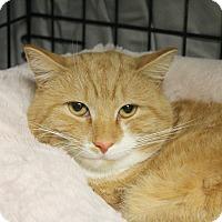 Adopt A Pet :: Pancake - Warwick, RI