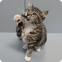 Adopt A Pet :: Clover - Seguin, TX