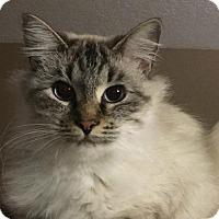 Adopt A Pet :: Layla - Menifee, CA