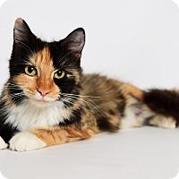 Adopt A Pet :: Phoebe - Tomball, TX