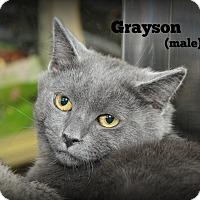 Adopt A Pet :: Grayson - Springfield, PA