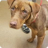 Adopt A Pet :: Daisy #163958 - Apple Valley, CA