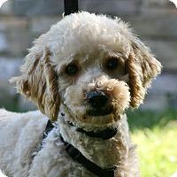 Adopt A Pet :: Dexter - Carlsbad, CA