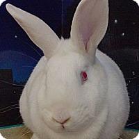 Adopt A Pet :: Ruby - Foster, RI