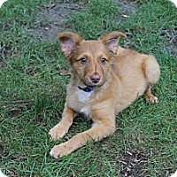 Adopt A Pet :: Baby Hunter - Marlton, NJ
