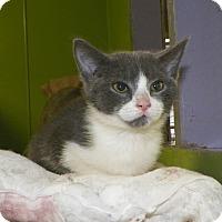 Adopt A Pet :: Kayla - Dover, OH