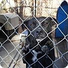 Adopt A Pet :: Say* - Henderson, NC