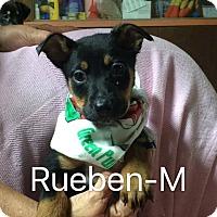 Adopt A Pet :: Ruben - Buffalo, NY