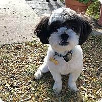 Adopt A Pet :: Nia - Buena Park, CA
