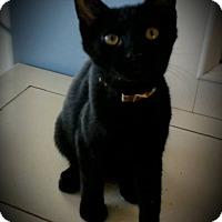 Adopt A Pet :: Mufasa - Fairborn, OH