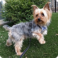 Adopt A Pet :: Chewy - Mt. Prospect, IL