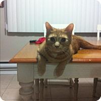 Adopt A Pet :: Tom - Leamington, ON