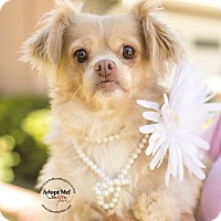 Adopt A Pet :: PROMISE - Inland Empire, CA