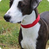 Adopt A Pet :: Tango - Grants Pass, OR