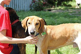 Redtick Coonhound Mix Dog for adoption in Pittsboro, North Carolina - Ernie