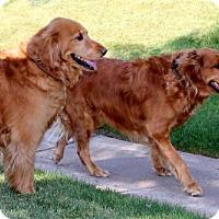 Adopt A Pet :: Kan Kan (PLACED) Adoption_Pending - Glendale, AZ