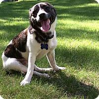 Adopt A Pet :: Loca - Edmonton, AB
