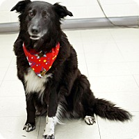 Adopt A Pet :: Hershey - Hillsboro, IL