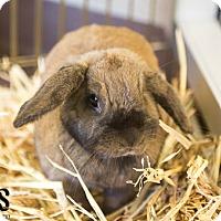Adopt A Pet :: Mandy - Burlingame, CA