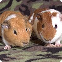 Adopt A Pet :: Arbok - Steger, IL