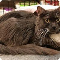 Adopt A Pet :: Gertrude - Sacramento, CA