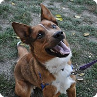 Adopt A Pet :: Tully - Hyde Park, NY