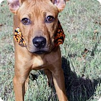 Adopt A Pet :: Rohan - Norman, OK