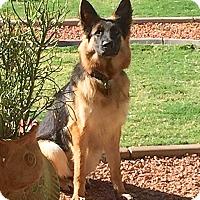 Adopt A Pet :: Marcie - Scottsdale, AZ