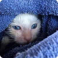 Adopt A Pet :: Ellen - New York, NY