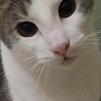 Adopt A Pet :: Duncan - Sarasota, FL