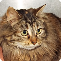 Adopt A Pet :: Ruby - Grants Pass, OR