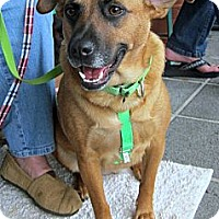 Adopt A Pet :: Lacy - Richmond, VA