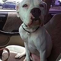 Adopt A Pet :: Nilla - Driftwood, TX