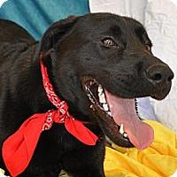 Adopt A Pet :: Inky - Phoenix, AZ
