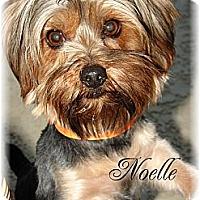 Adopt A Pet :: Noelle - Palm City, FL