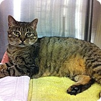 Adopt A Pet :: Purry - Warminster, PA