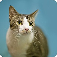 Adopt A Pet :: Emil - Chicago, IL