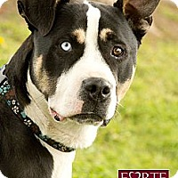 Adopt A Pet :: Henry Blue - Marina del Rey, CA