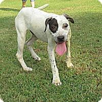 Adopt A Pet :: Petey - Conway, AR