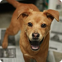 Adopt A Pet :: Finnegan - Canoga Park, CA