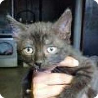 Adopt A Pet :: Crosby - Putnam, CT