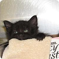 Adopt A Pet :: Nemo - Athens, GA