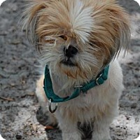 Adopt A Pet :: Tabitha - Bradenton, FL