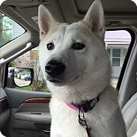 Adopt A Pet :: Kumi - Bristol, CT