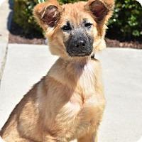 Adopt A Pet :: Destiny - Greensboro, NC