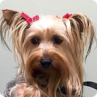 Adopt A Pet :: I'M ADOPTED Twister Vukusich - Oswego, IL