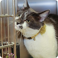 Adopt A Pet :: Oreo - Sierra Vista, AZ