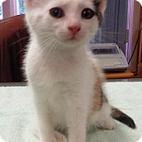 Adopt A Pet :: Kelli - Lebanon, PA