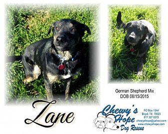 German Shepherd Dog Mix Dog for adoption in Boyd, Texas - Zane