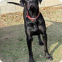 Adopt A Pet :: Jesse - Lindsay, CA